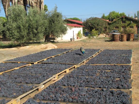 Olympia_winery