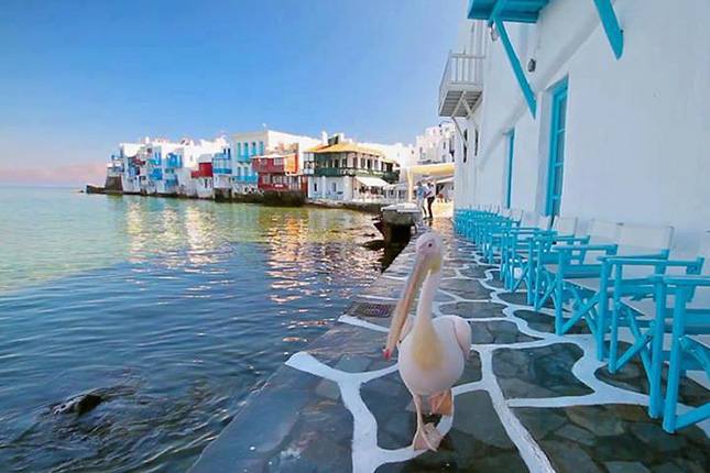 Mykonos on foot – A Culinary Experience  4