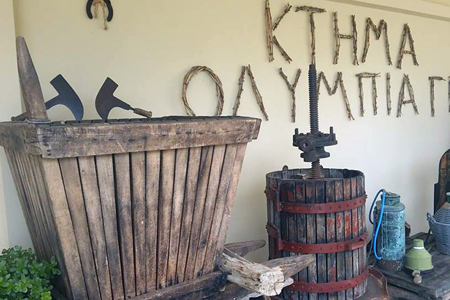 Olympia & Wine Flavors (Ancient Site and Winery) 7