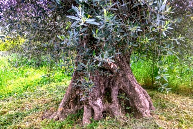 olive oil tasting Olympia